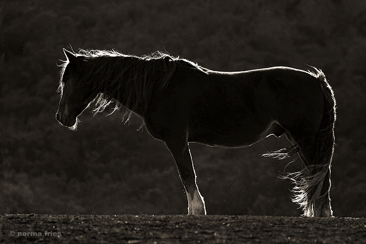 """WH109: """"Lone mustang"""""""