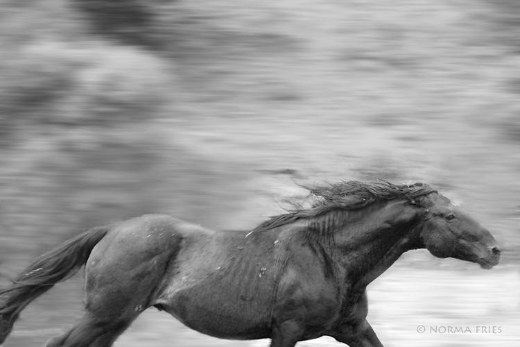 "WH114: ""Wild stallion run"""