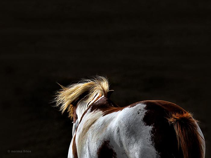 "WH127: ""Horse study IV"""