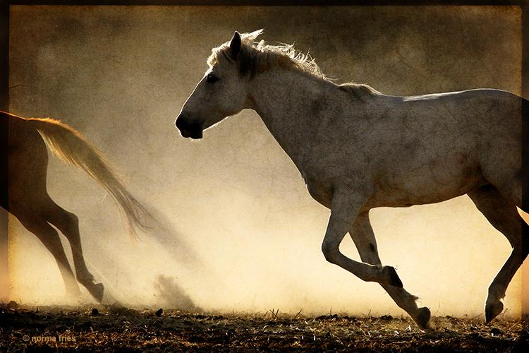 """WH126: """"Gray mare's sunset run"""""""
