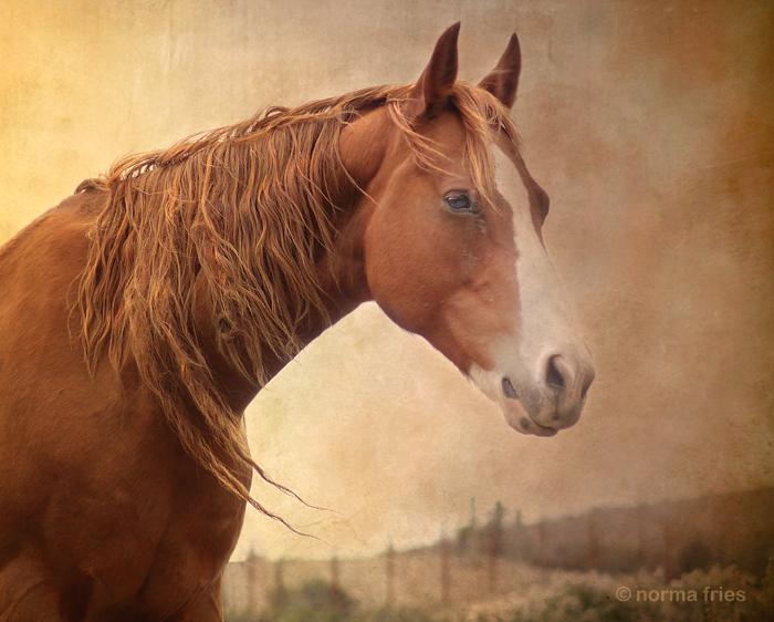 """WH135: """"Renaissance horse"""""""