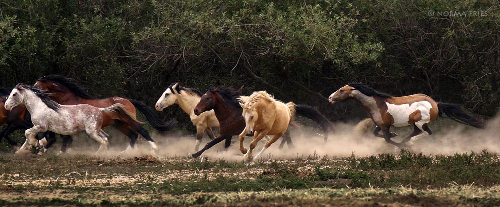 "WH144: ""Six stallions run"""