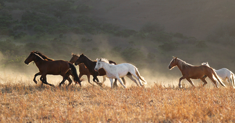 """WH148: """"Gray mare at sunset"""""""