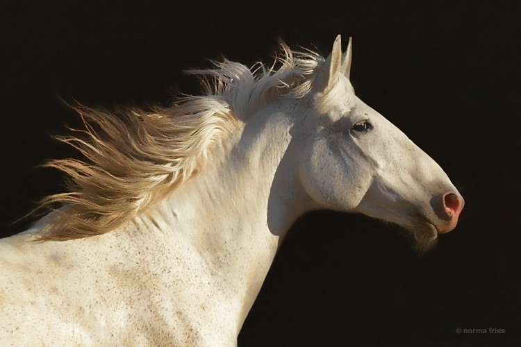 """WH149: """"The gray mare"""""""