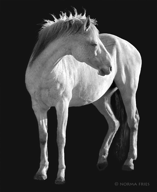 """WH150: """"The gray mare turns her head"""""""