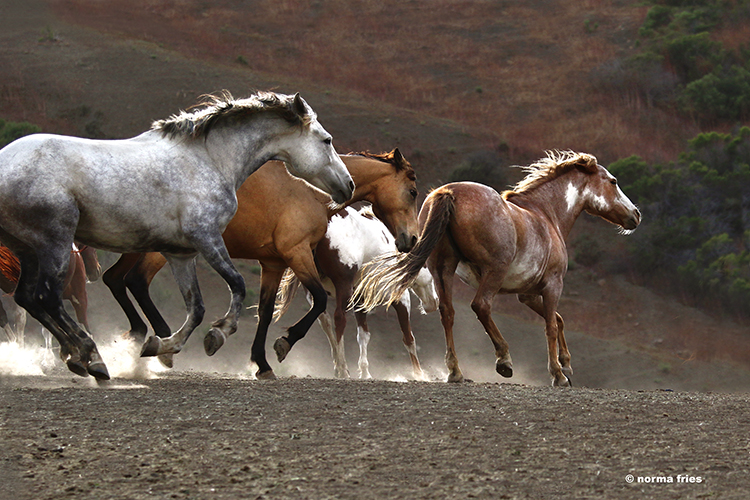 """WH160: """"Mares enjoy the evening"""""""