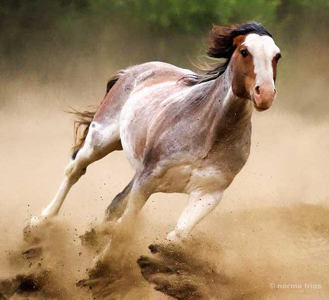 "WH162: ""Stallion power"""
