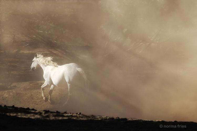 "WH173: ""Spirit horse"""