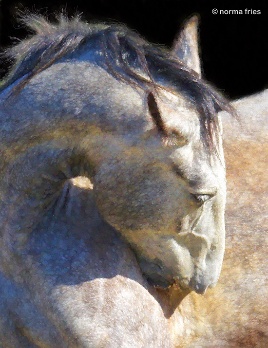 "WHP113: ""Equine head turn"""