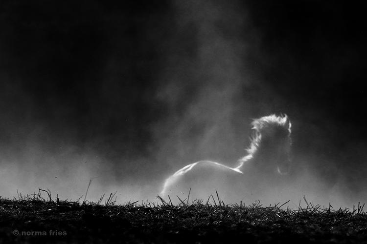 """WHP117: """"Horse dream"""""""