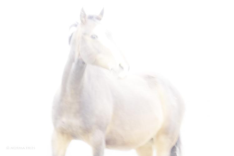 """WHP122; """"War horse"""""""