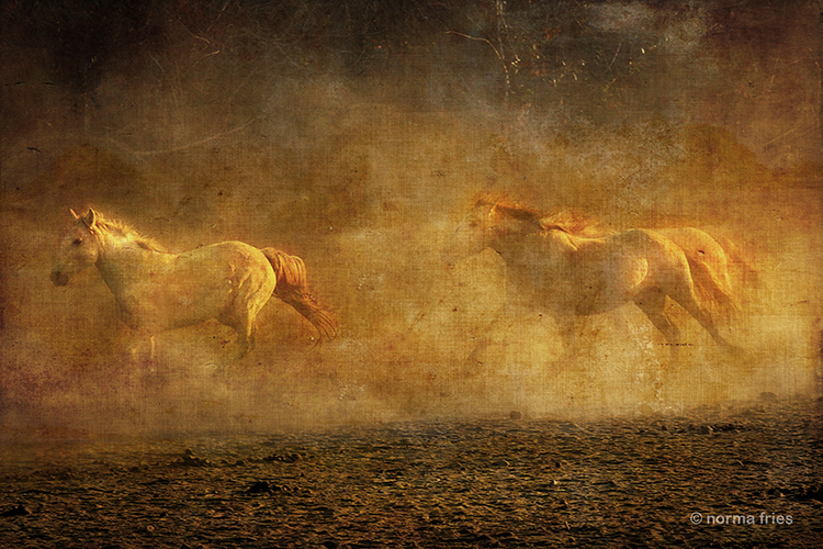 """WHP100: """"Horse morning"""""""