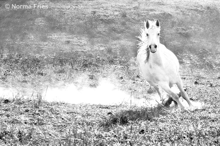 """WHP133: """"Gray mare cuts right"""""""