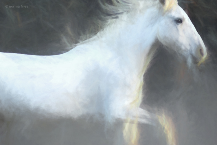 """WHP134: """"Horse flame"""""""