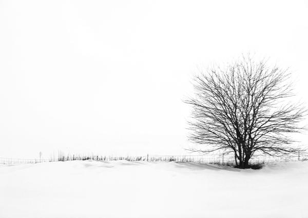 """LN913: """"Lone tree"""""""