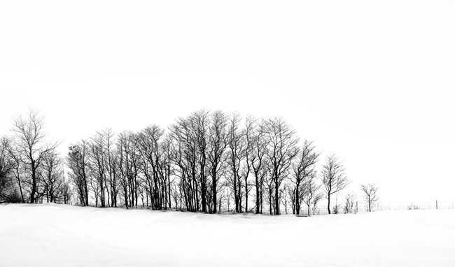 "LN914: ""Tree stand"""
