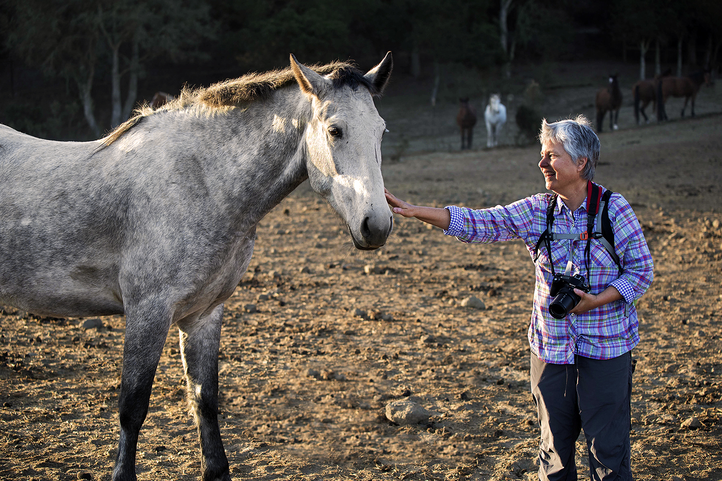 A mare in the Challis wild horse herd at Return to Freedom kept following me. I hoped to touch her but knew not to approach. So I put out my hand and she promptly pushed her nose right on it.  Happy happy!
