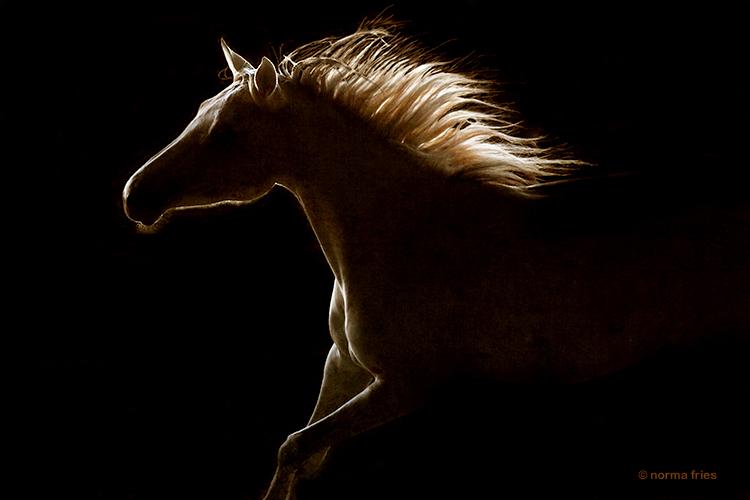 """WH145: """"Wild spirit horse"""""""