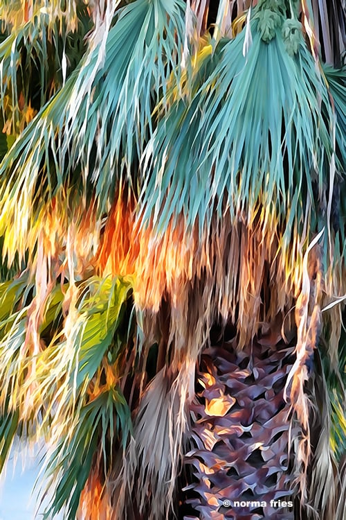 """XX1005: """"Palms"""""""