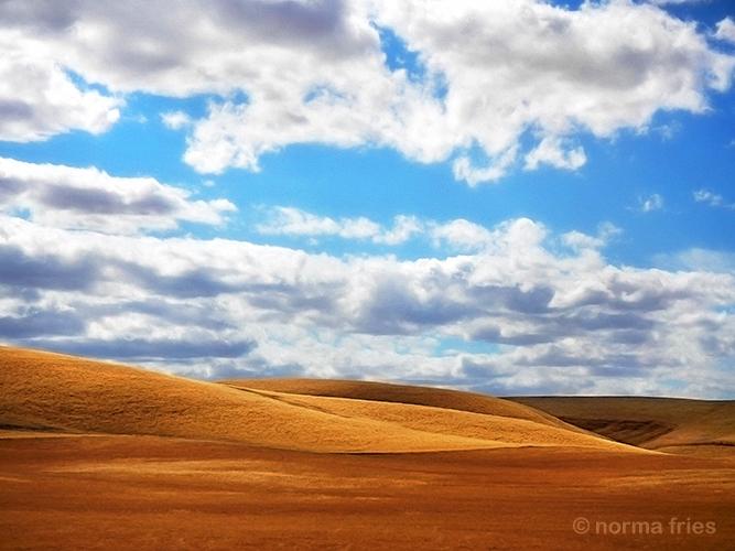 LN930: California golden hills