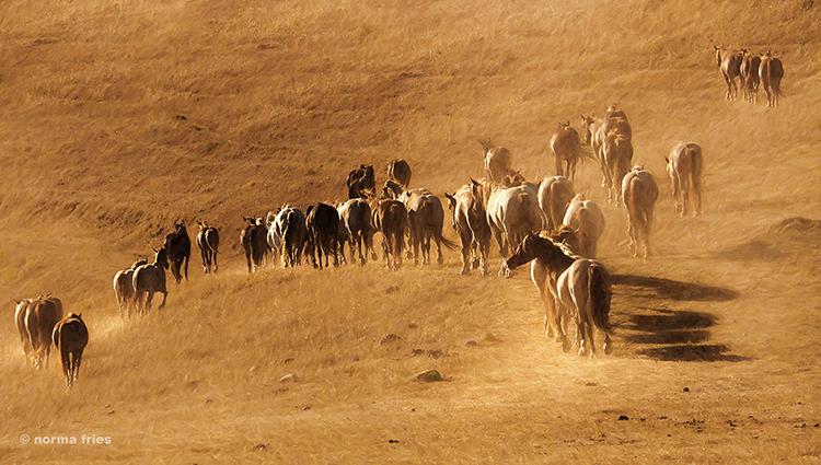 """WH199: """"Desert horses"""""""