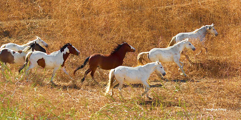 """WH212: """"Seven Choctaw run in the tall grass"""""""