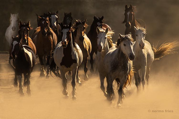 WH232: Heaven's horses