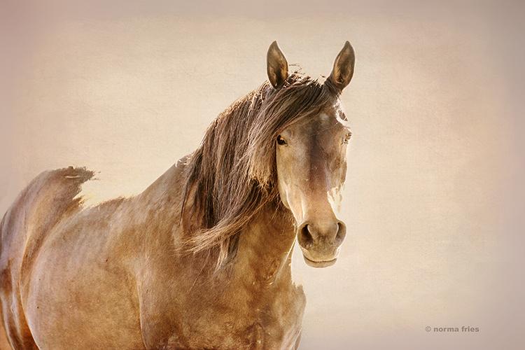 WH234: Portrait of Hart Mountain wild horse