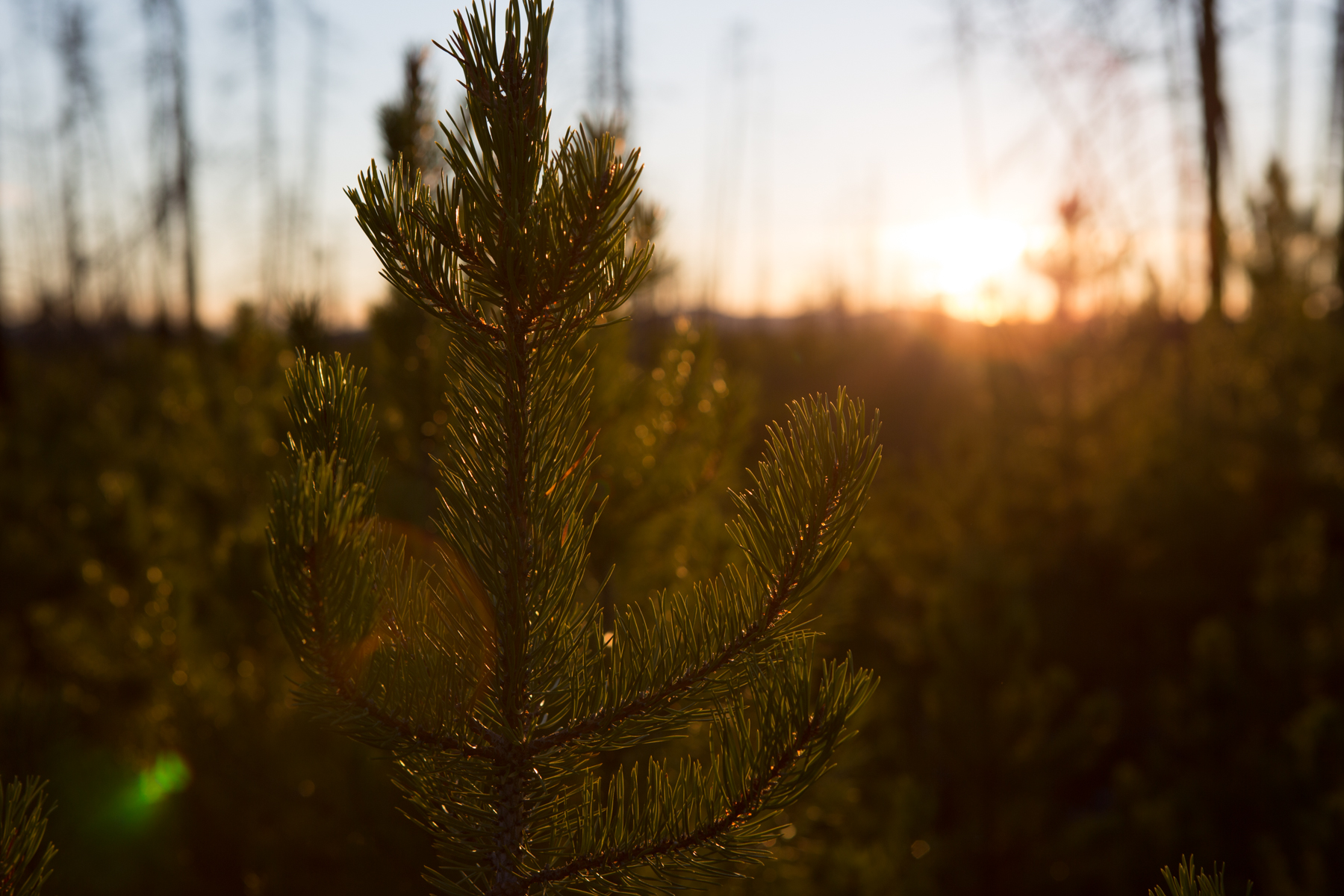 ENIYUD COMMUNITY FOREST  Tsi Del Del First Nation and Tatla communities have come together to manage local forestry resources.   Creating Sustainable Communities →
