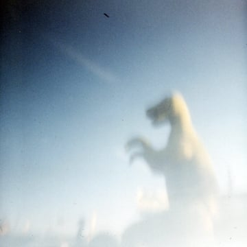 PinHole T-Rex