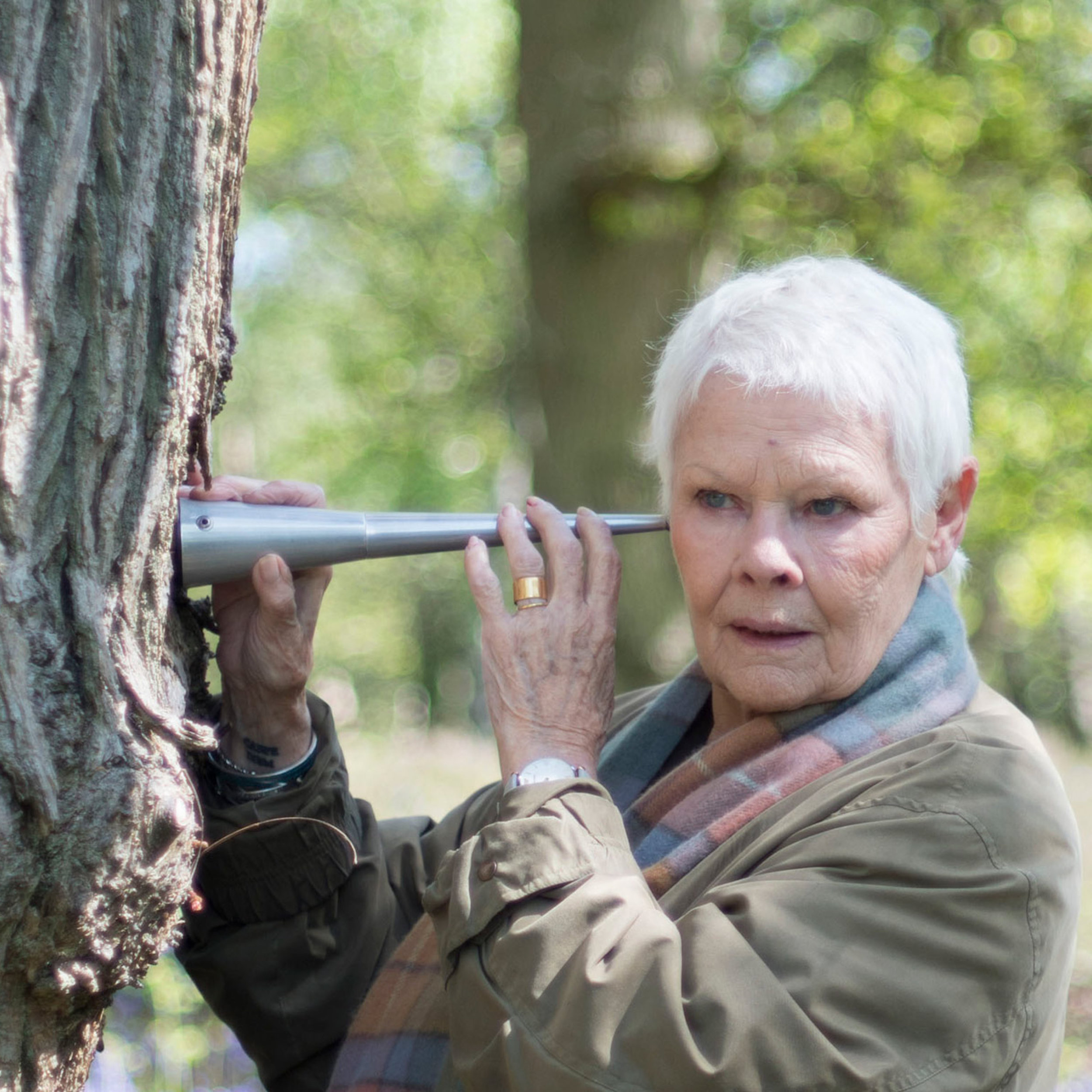 Hero-Landscape-14878828-high_res-judi-dench-my-passion-for-trees copy.jpg