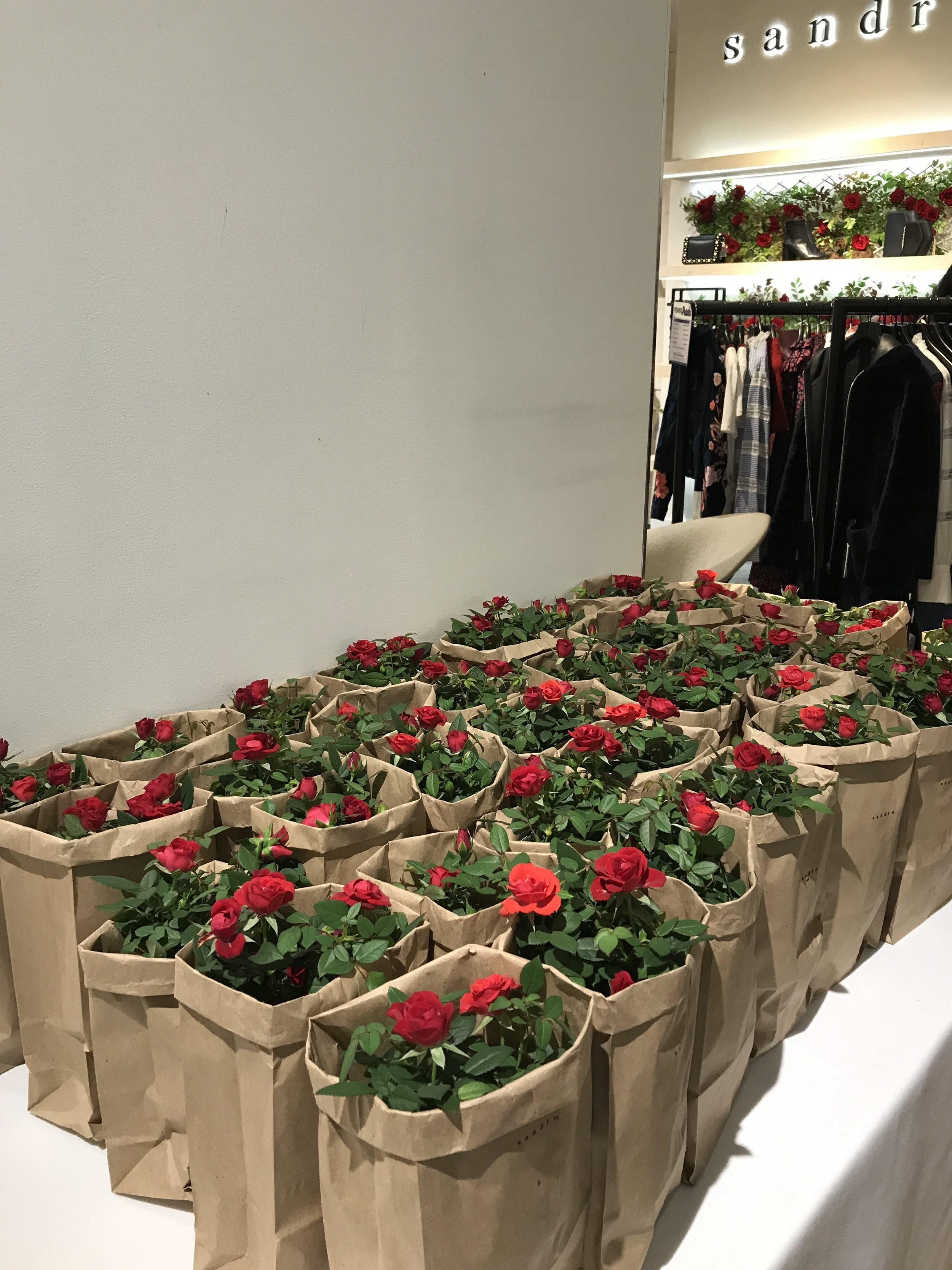 Sandro Garden Roses