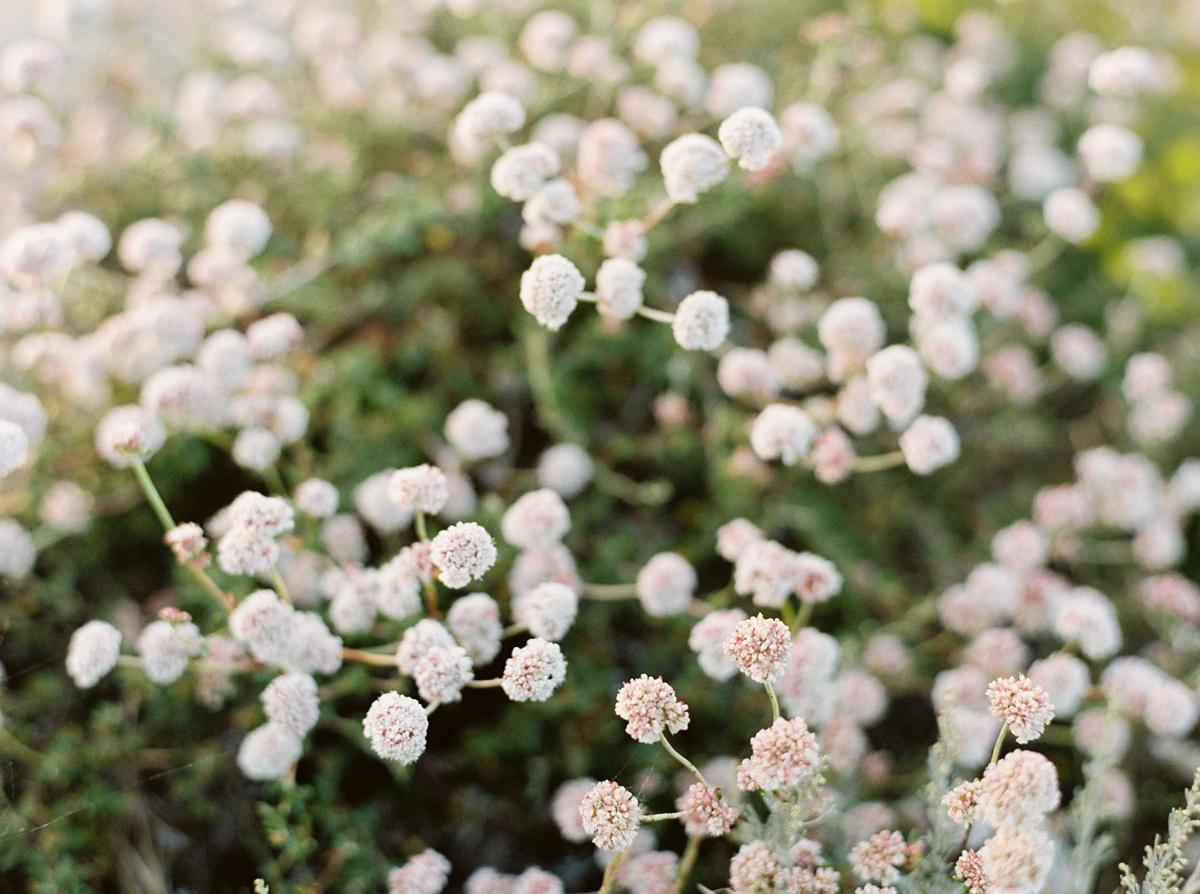 34631_04_sarahwindeckerphotography_californiafineartfilmphotographer.jpg