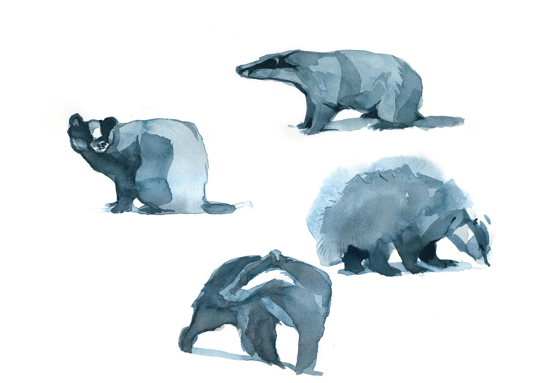 badger_research.jpg