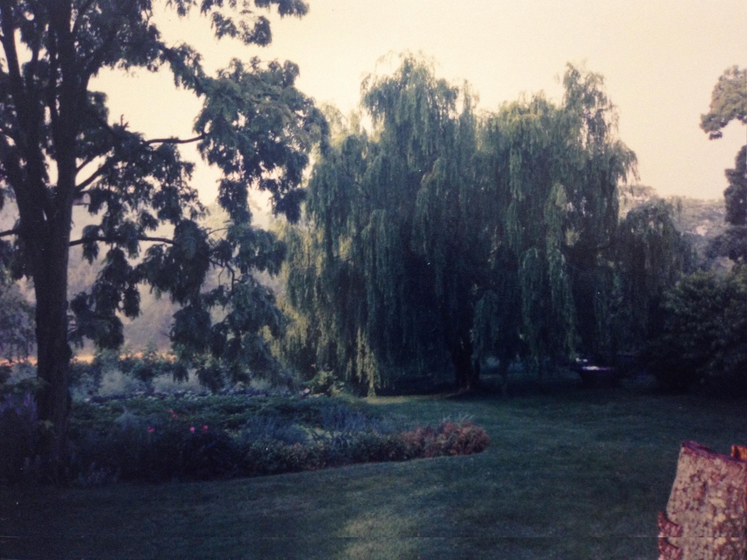 the garden & weeping willow