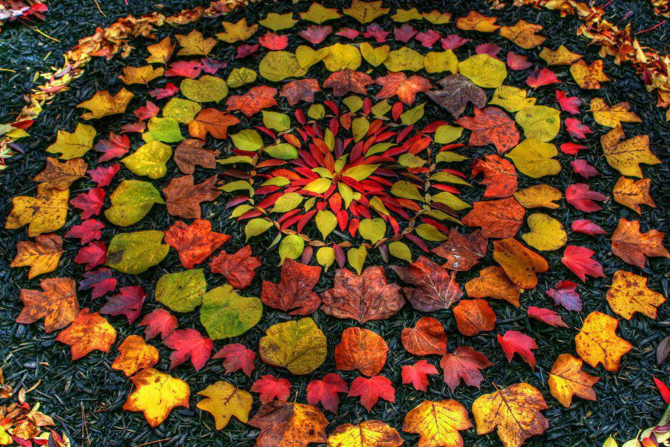 autumn-leaves-circle.jpg