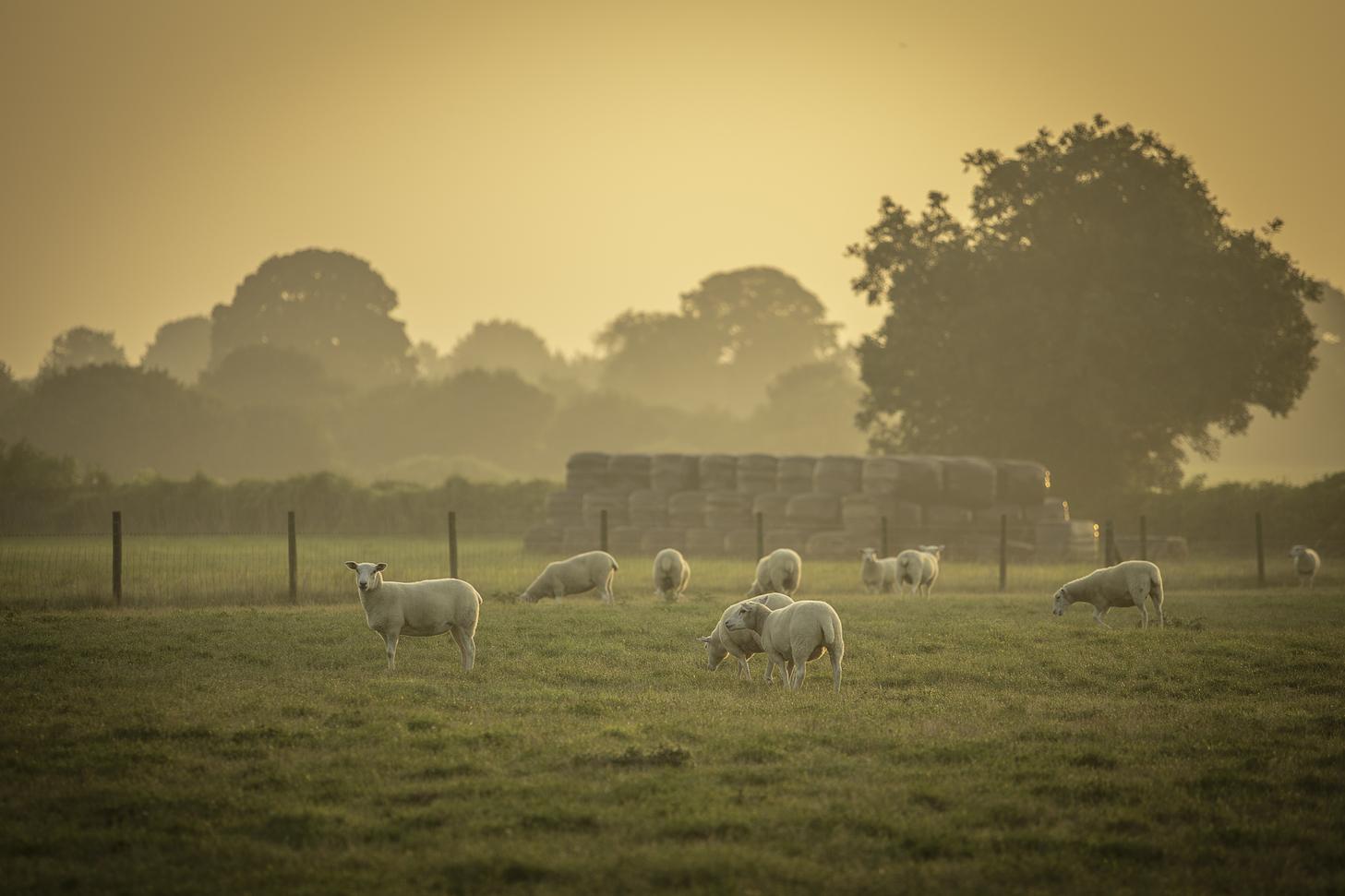 sheep-field-views.jpg