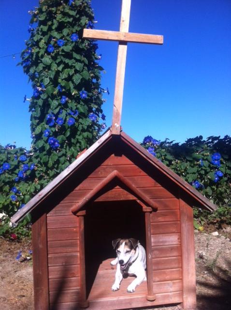 dog chapel 2.jpg