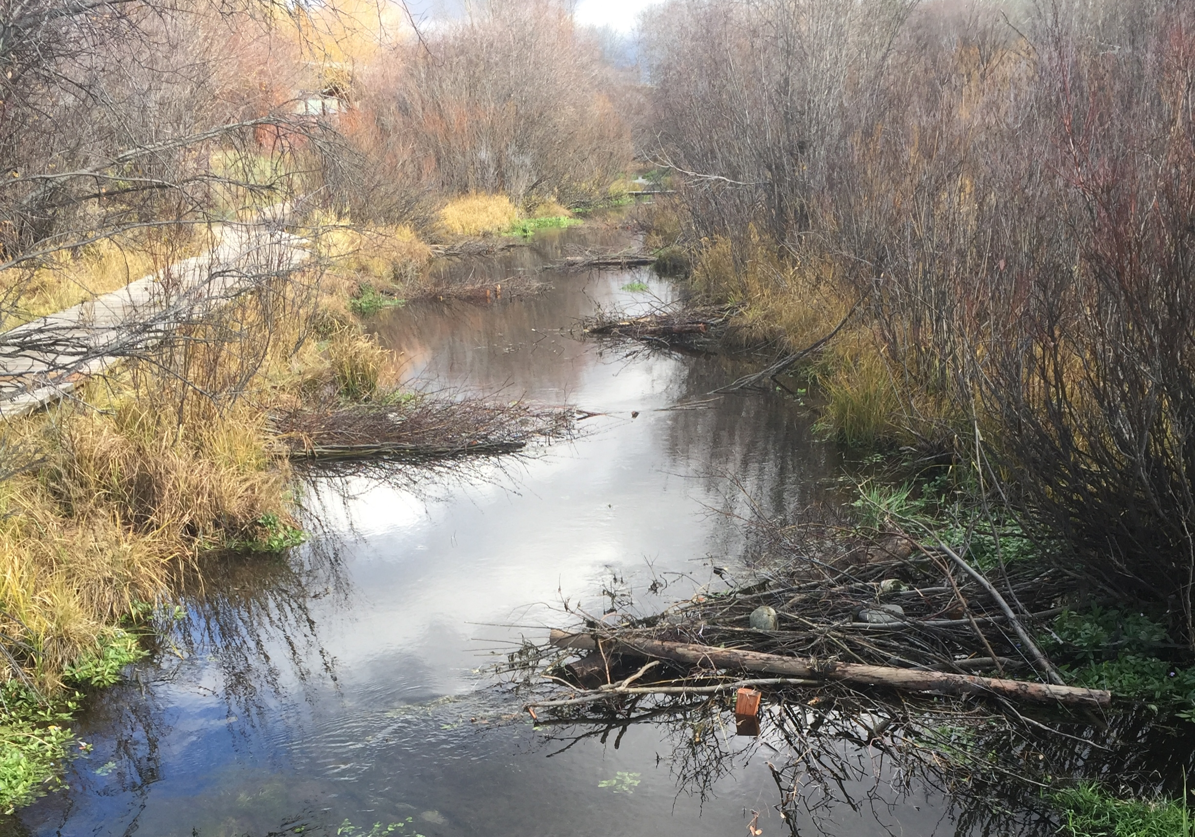 Small woody debris structures to provide habitat for juvenile Snake River cutthroat trout - stream restoration