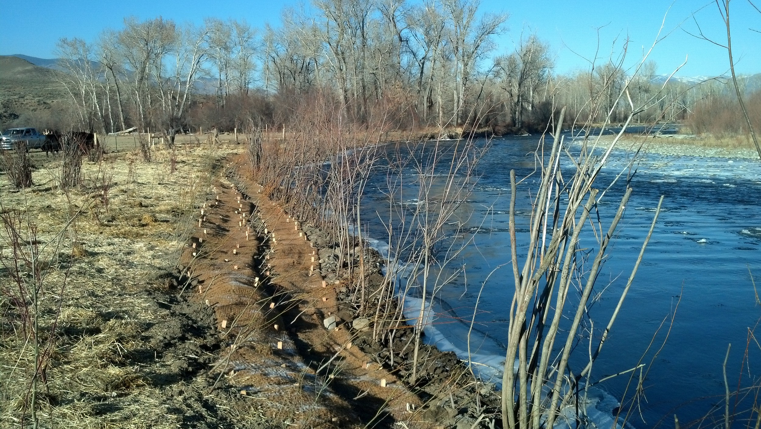 Stream restoration stabilization has been completed, using transplanted willows, soil wraps, and rows of containerized plants
