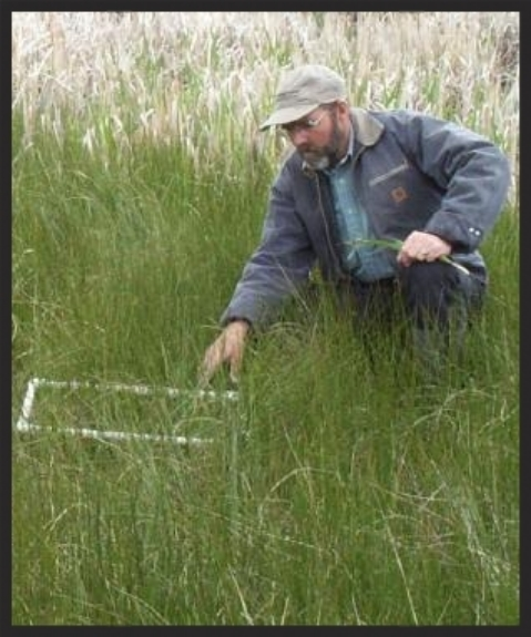Paul Hook, Wetland & Watershed Scientist   Ph.D. Range Science/Ecology, Colorado State University, M.S. Biology, East Carolina University B.S. Botany, University of Washington  Paul has been working in natural resource research and consulting, primarily in Montana, Idaho, Colorado, and Wyoming since 1988. He specializes in wetland, riparian and rangeland ecology, including research; grant writing, publication, and resource analysis. He has expertise in plant-based approaches to wastewater treatment, sediment control, and streambank stabilization; invasive plant establishment in wetlands; plant-soil relations; and quantitative methods for ecological and water resource studies. Paul worked as an assistant professor at Montana State University for 7 years before joining IMA and taught courses in wetland ecology, watershed management, and ecological monitoring. Paul has provided his expertise in statistics and scientific monitoring on numerous IMA projects and has contributed directly to research on revegetation methods for sedge wetlands, analysis of thermal impacts from pond development, design of a wetland plant nursery, completing a stormwater wetland feasibility analysis, studies of weed control and streambank bio-engineering, and designs for a wastewater wetland treatment facility.