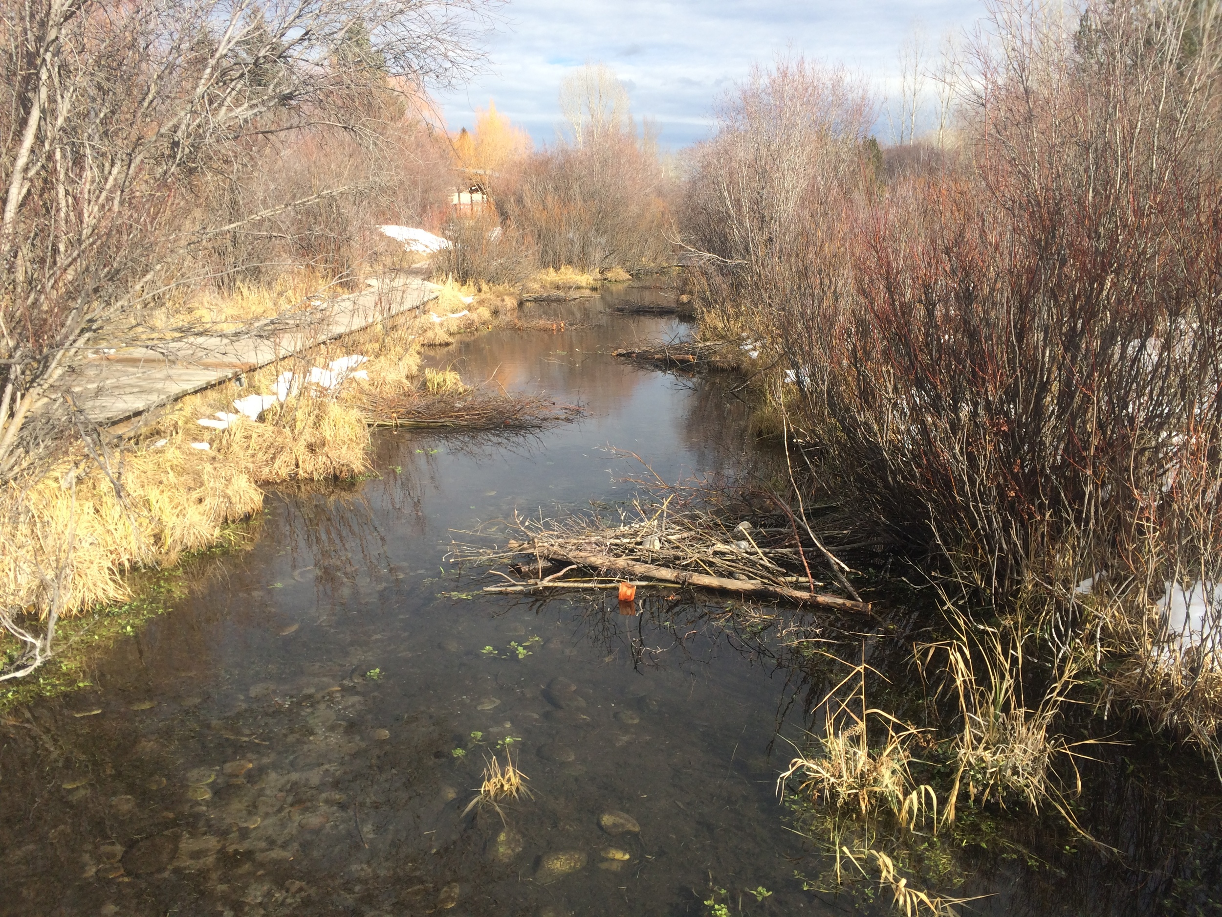 After - small woody debris structures channelize the creek and provide cover for juvenile trout