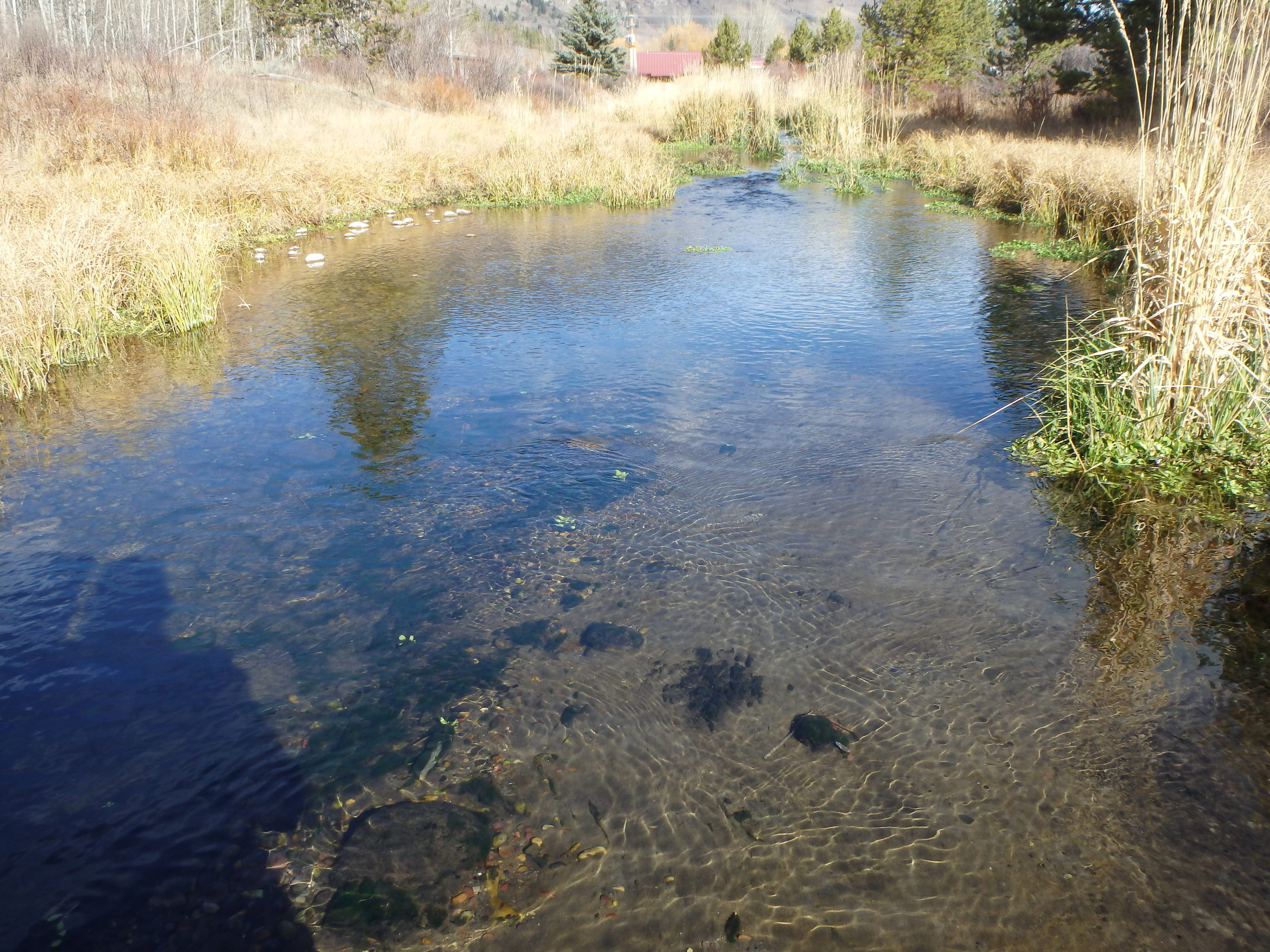 Before - the creek is silted and has minimal bank vegetation to provide shade and cover