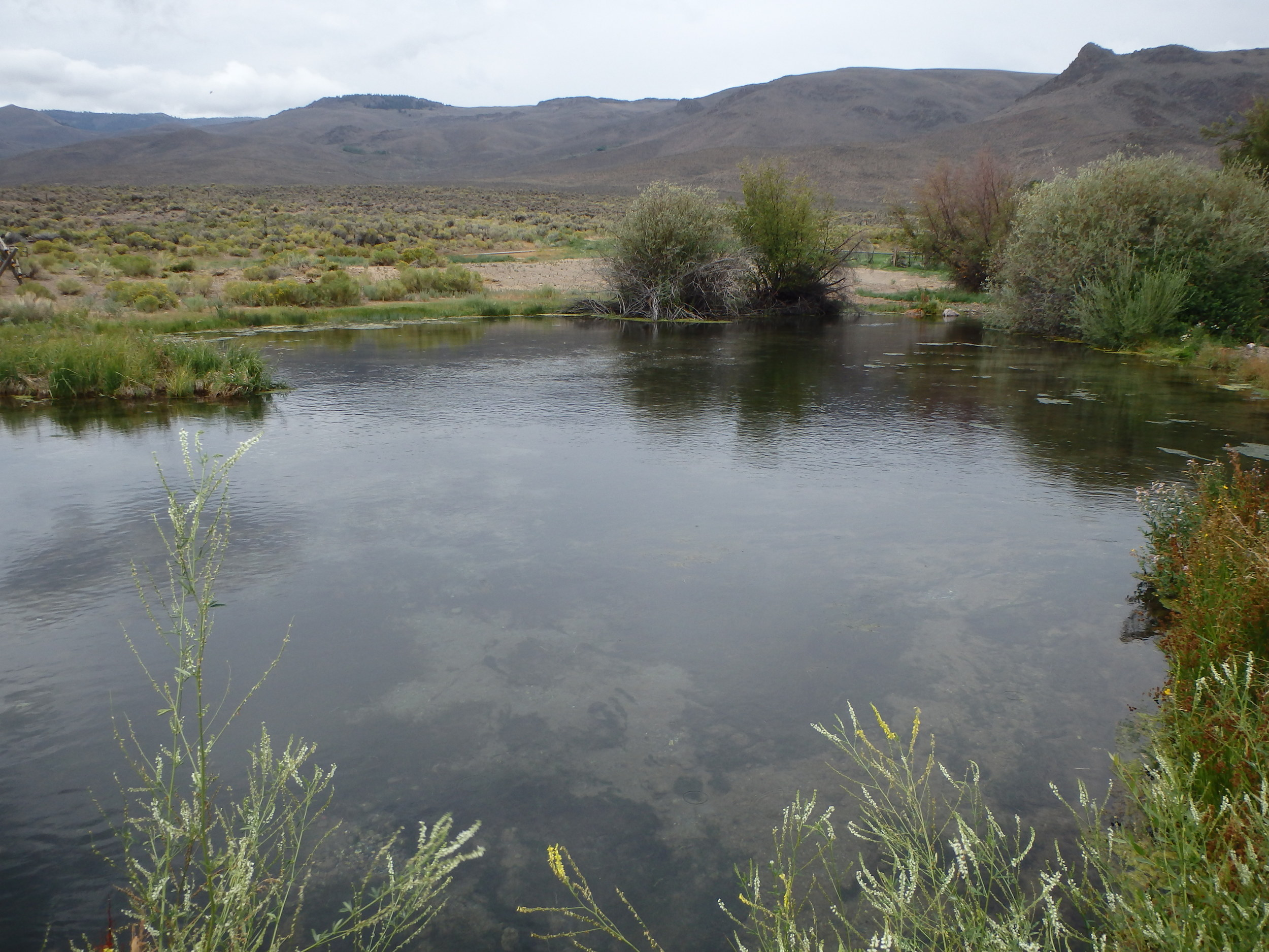 Fall 2014 - Before - the wide, slow creek offers minimal trout habitat