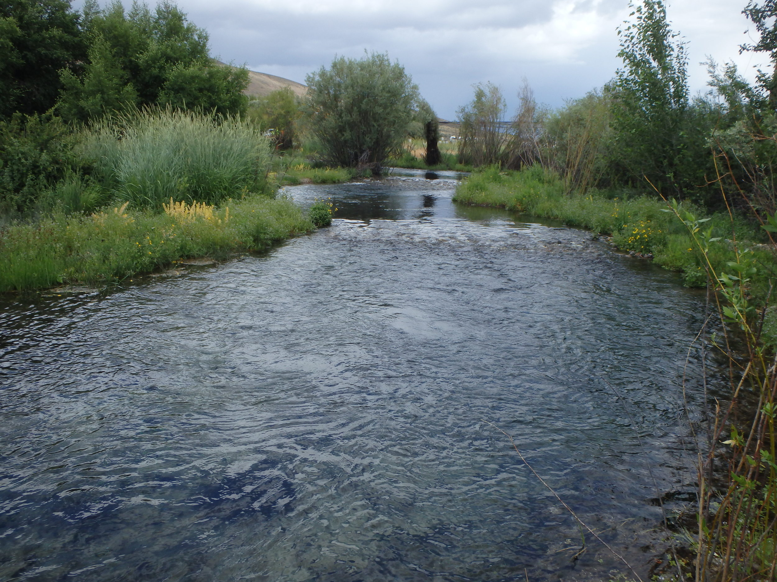 Summer 2015 - After - creek is narrowed, contains distinct riffles and pools, and is surrounded by lush riparian vegetation
