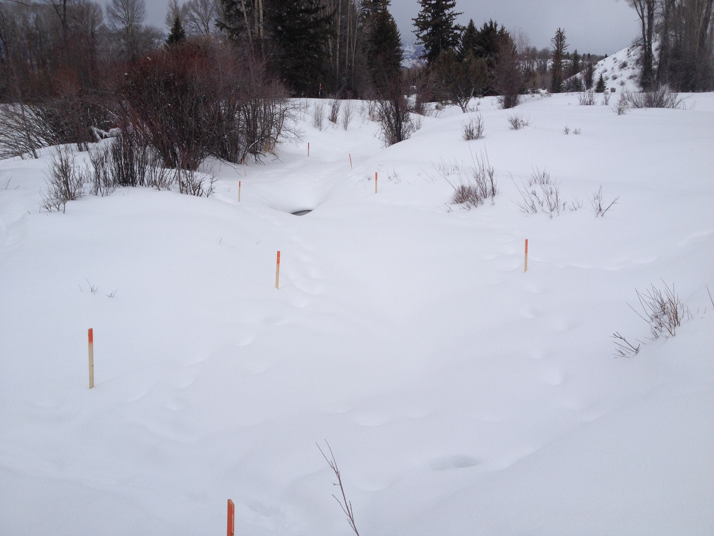 Before - The new channel is staked prior to excavation and construction