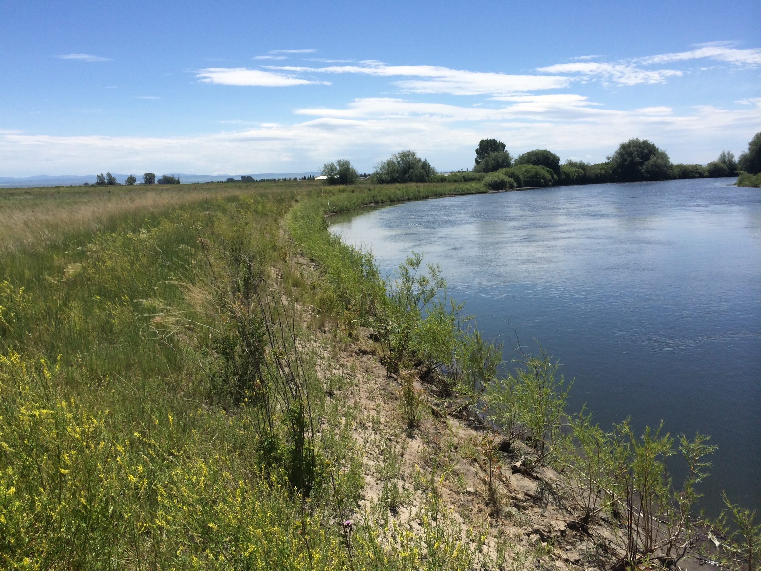 After - bank has been re-sloped and is held in place by many rows of planted willows