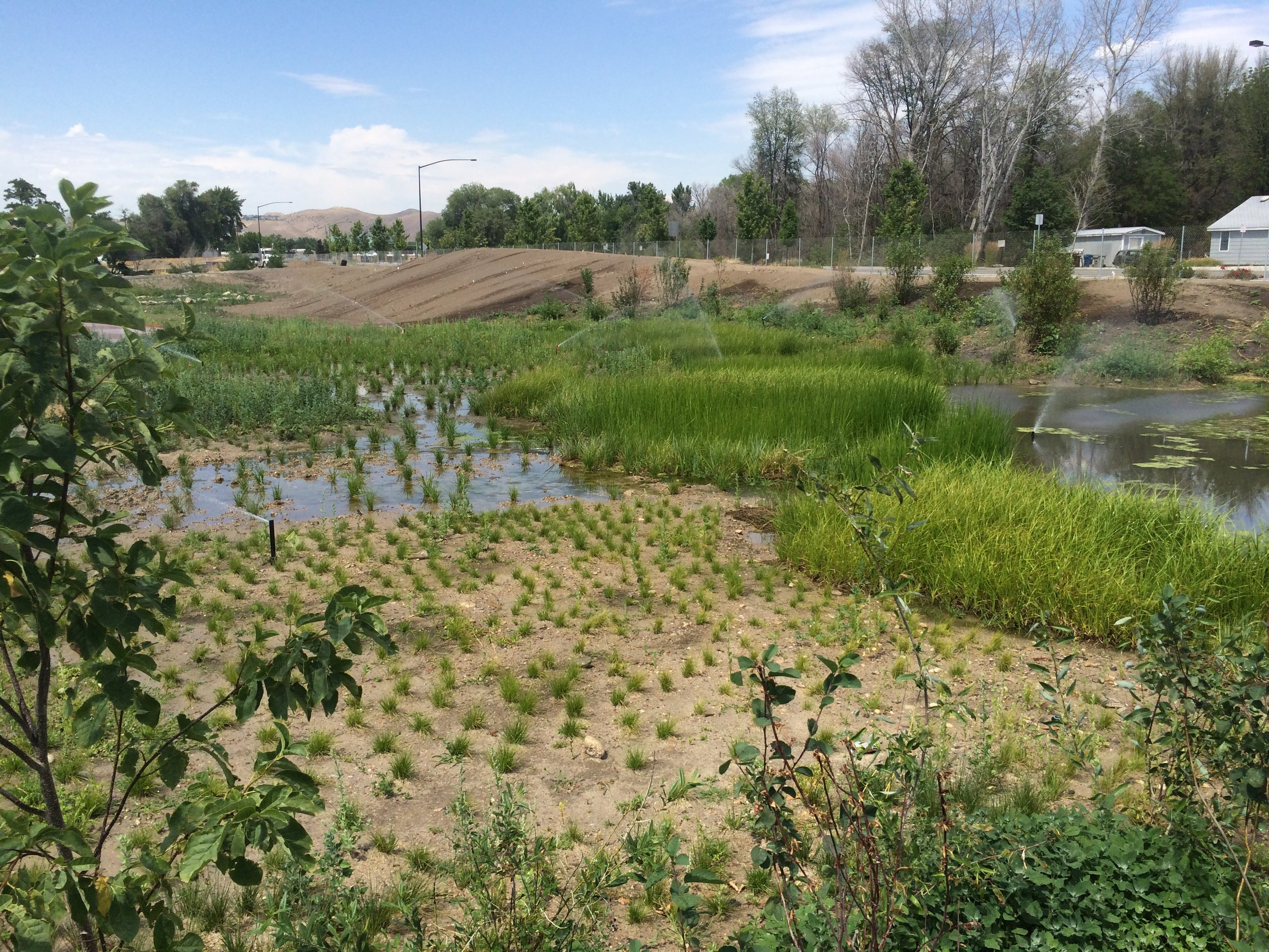 Wetland sod and bare root plants.