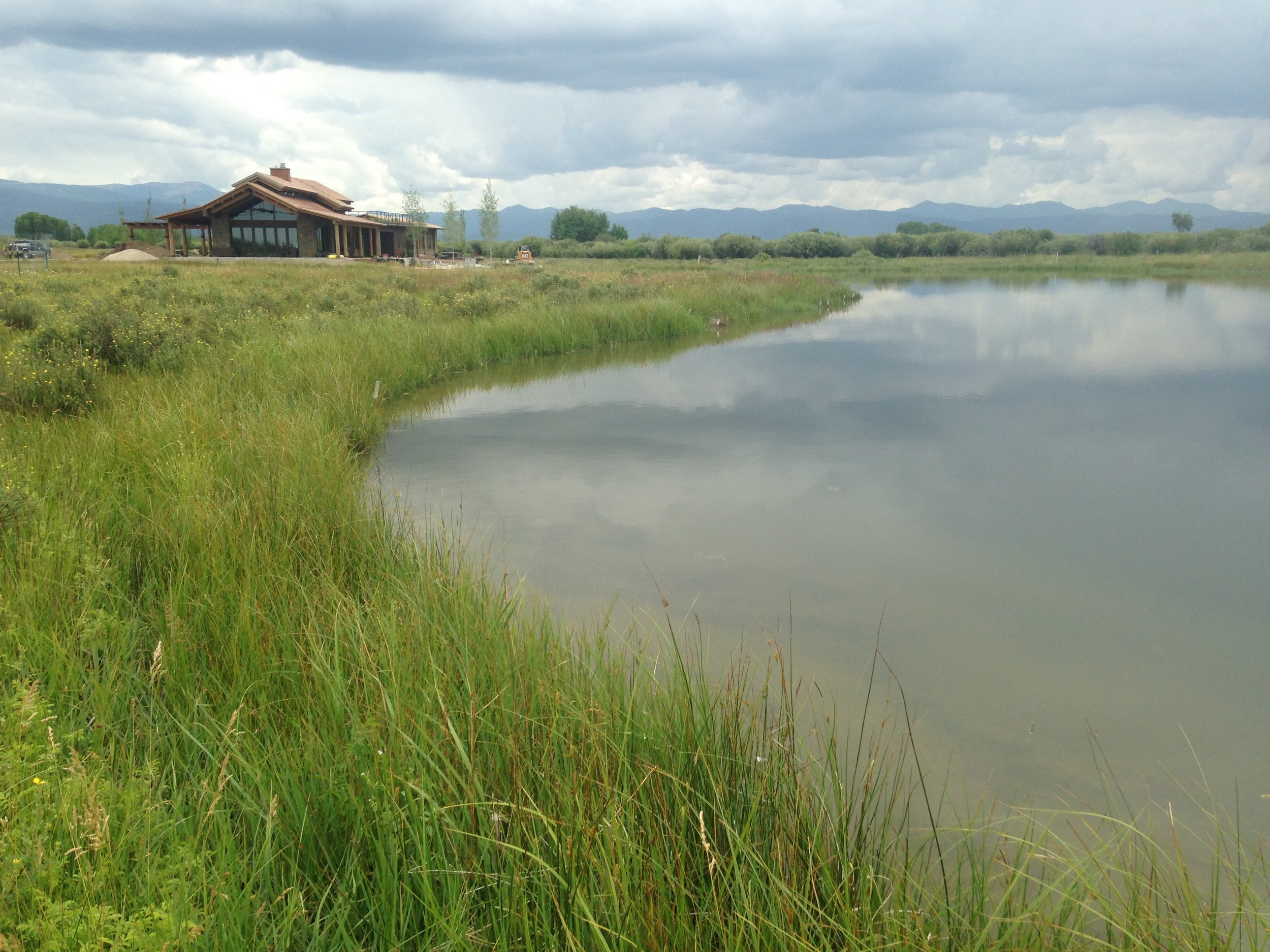 Completed pond with established vegetation for wildlife habitat restoration