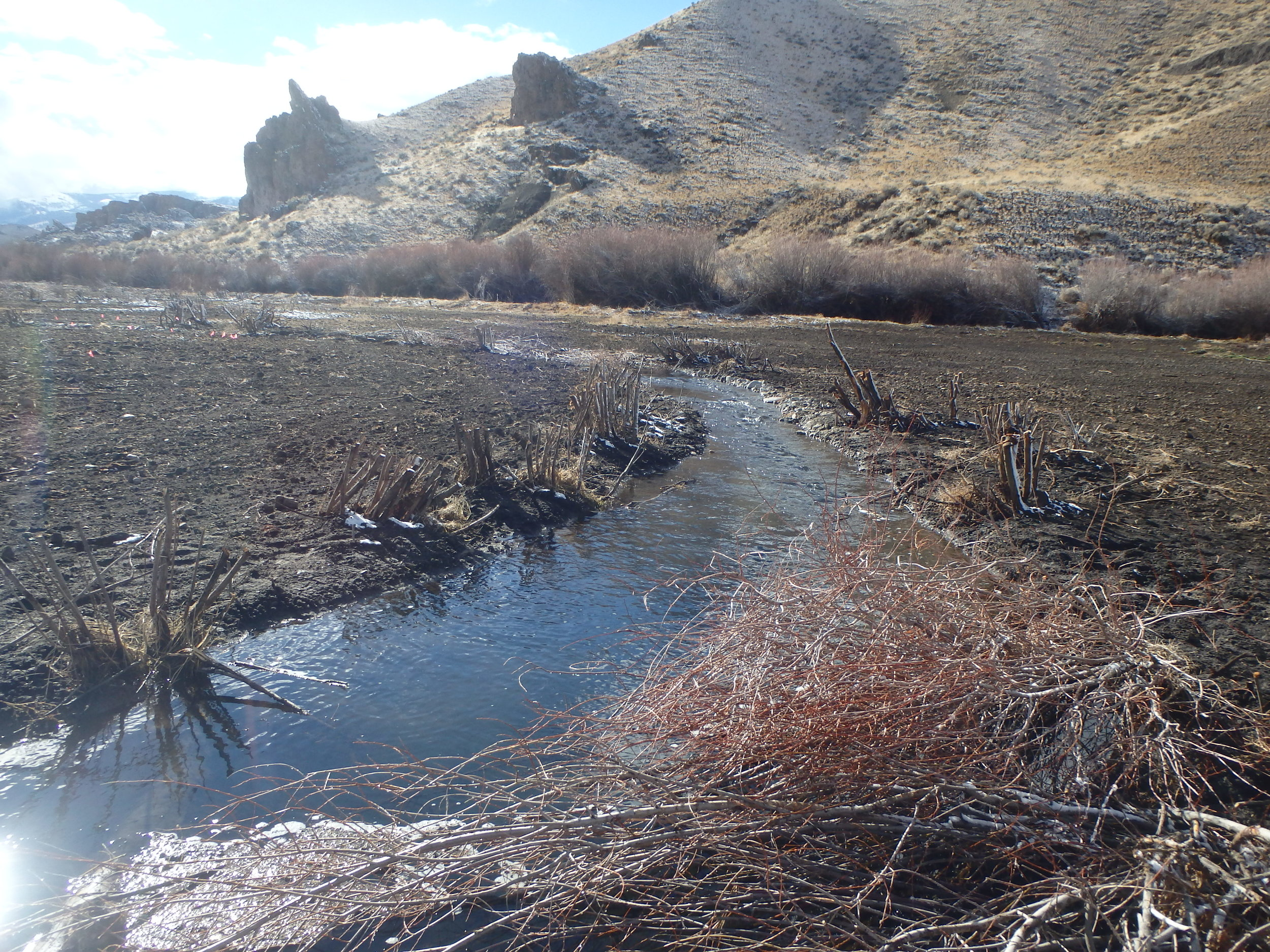 Immediately after construction: the stream flows through the meadow and complex aquatic features provide juvenile Chinook salmon over-winter habitat